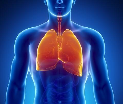 אימון כושר אישי - השפעת פעילות גופנית אירובית סדירה על תפקודה של מערכת הנשימה